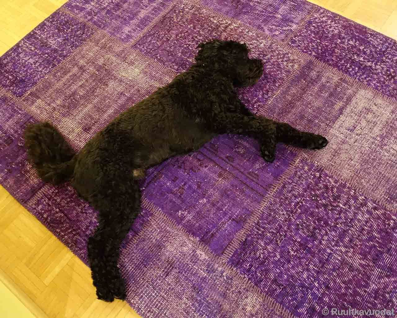 woolen sleeping dog danish design dark blue area rugs