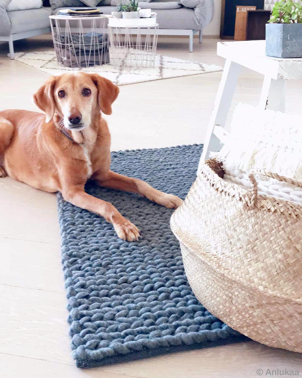 brown dog and basket india contemporary rugs usa