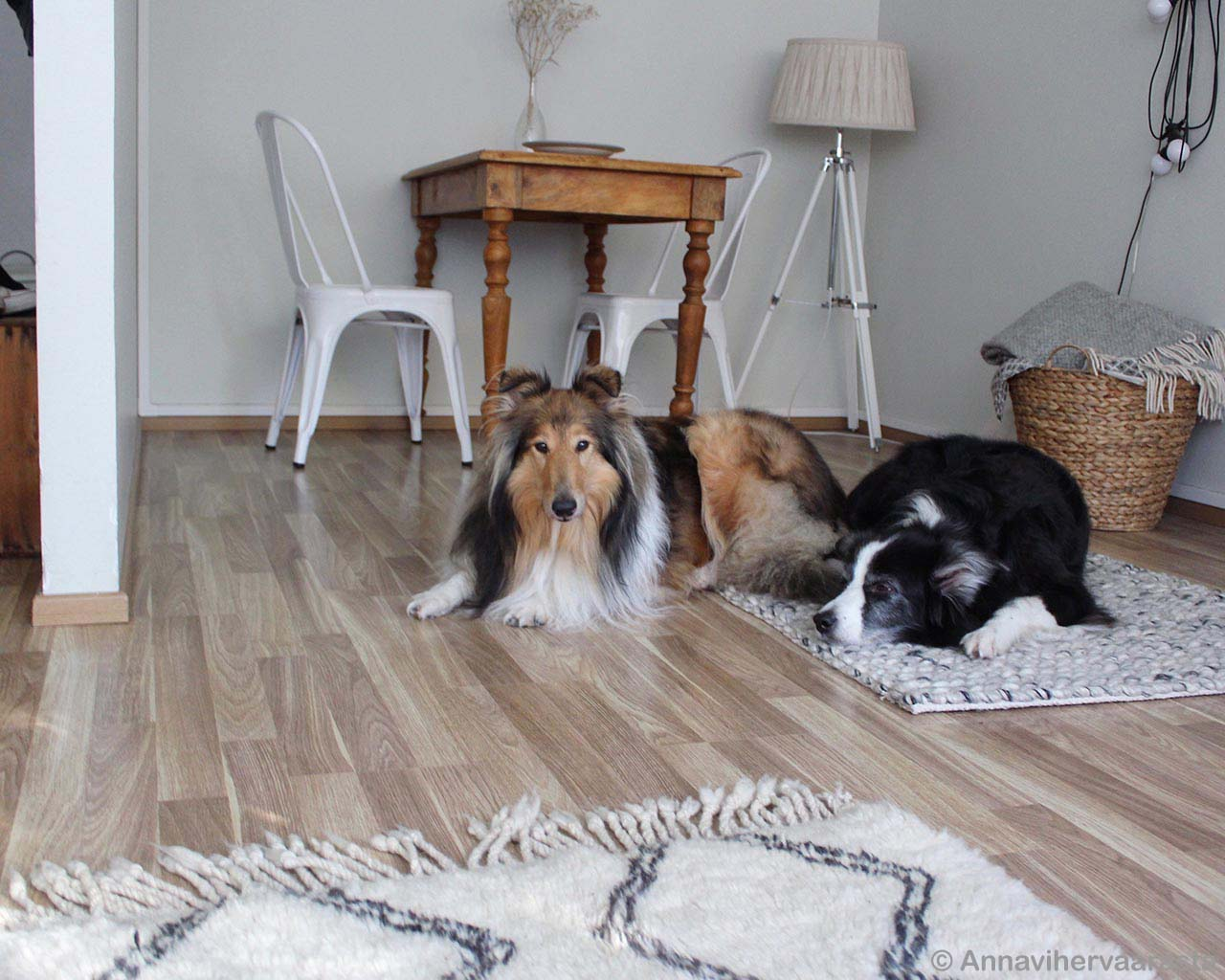 hand made dogs on floor made in india rugs
