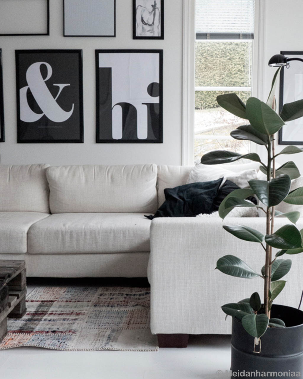 plant and sofa multi shade clearance rugs