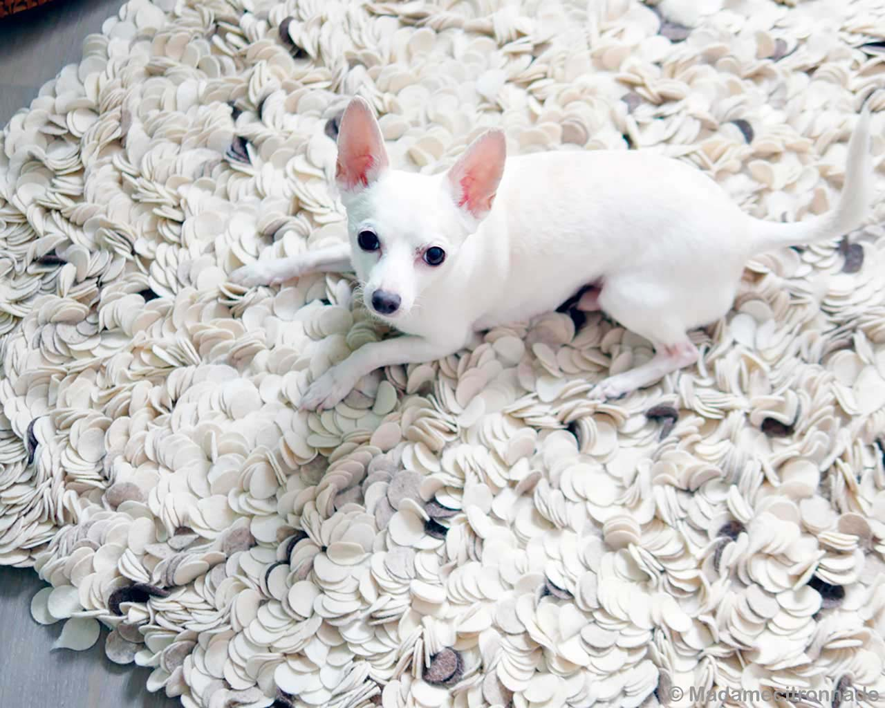 sweet puppy contemporary milky white rugs usa