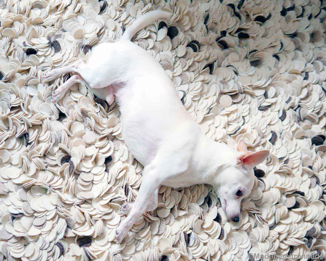 white dog modern light color carpet