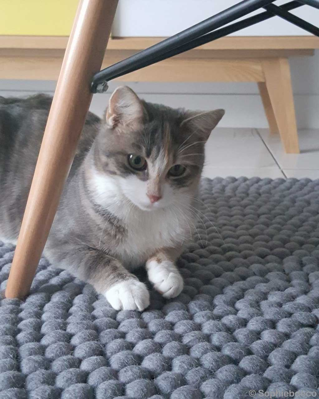 woolen cute cat under the chair made by nepalian traditional cheap area rugs