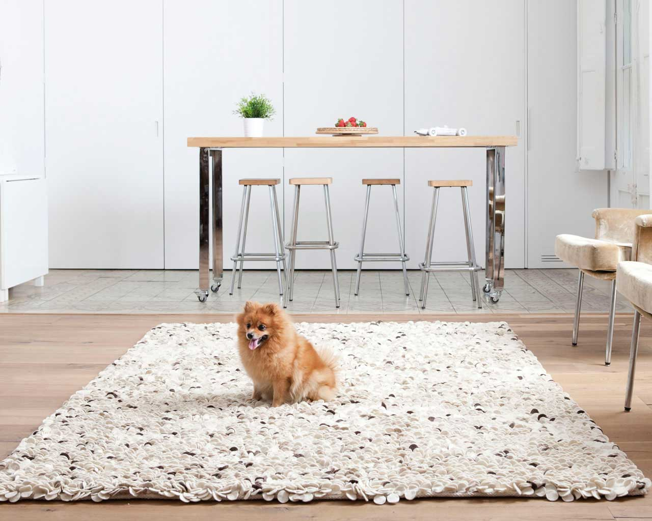 cute dog kitchen rugs stylish