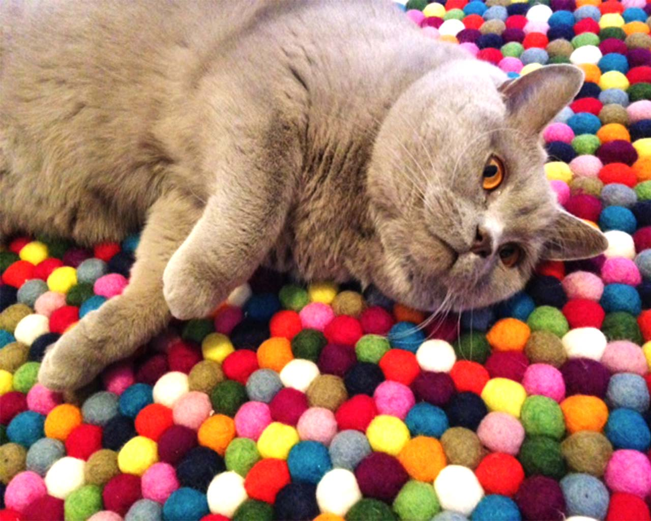 grey cat many colours felt ball carpet